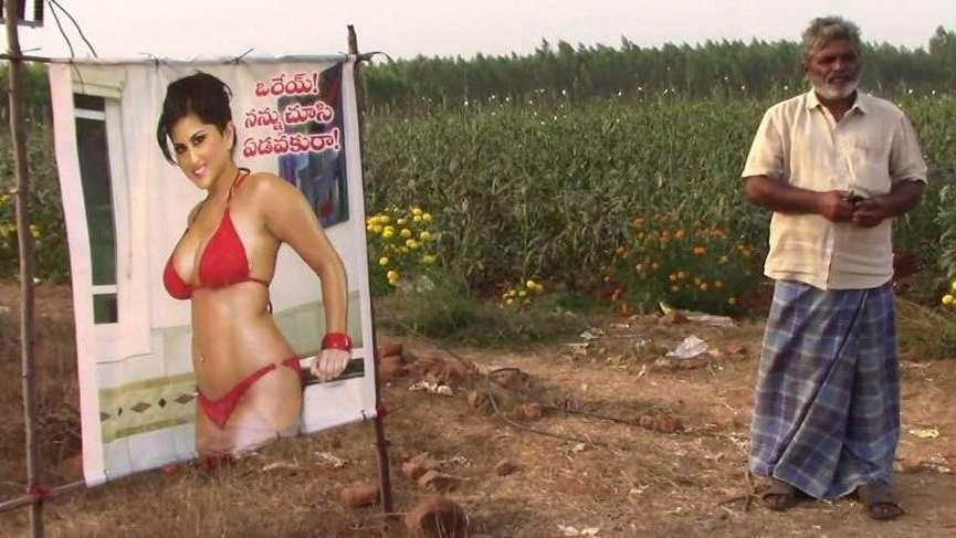 Çiftçiden bir garip çözüm: Porno yıldızını korkuluk yaptı