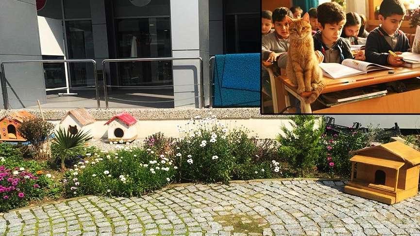 Tombi'yi sınıfa döndüren müdür bahçede de kedi besliyor
