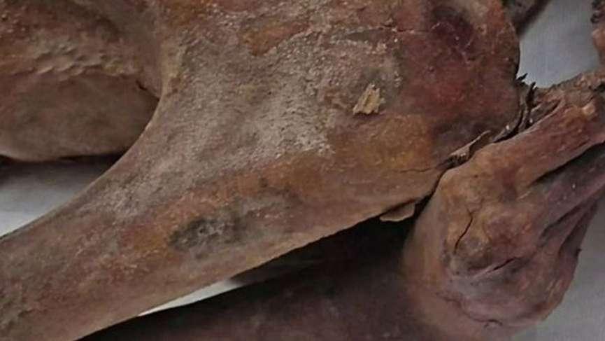 5 bin yıllık mumyada şaşırtan keşif!