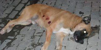 Polisten köpeğe 4 kurşun