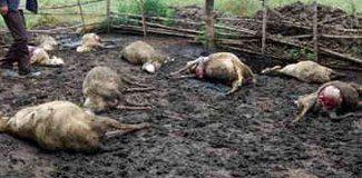 Aç kurtlar saldırdı