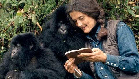 Dian Fossey Kimdir?