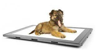 Evcil hayvanı iphone'ndan takip