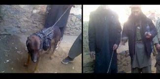 Taliban, Amerikan askeri köpeğini 'esir aldı'!