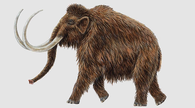 60.000 yıllık kalıntı umutlandırdı