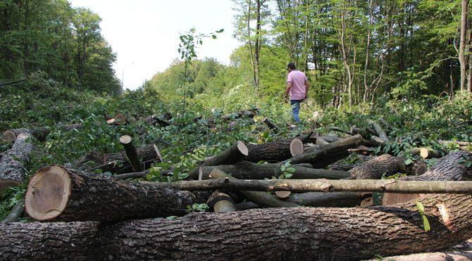 ağaç katliamı ile ilgili görsel sonucu