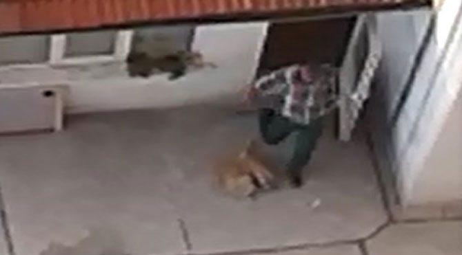 Köpeğe dayak kamerada!