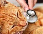 Fransa'da kediye işkenceye 3 ay hapis