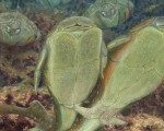 385 milyon yıl önceki ilk cinsel ilişki