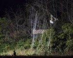 Uçak ile helikopter çarpıştı: 3 ölü, 2 yaralı