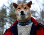 Bu köpek ayda 15 bin dolar kazanıyor