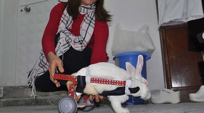 Felçli tavşana yürüteç