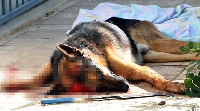 Köpeğini yol ortasında öldürdü