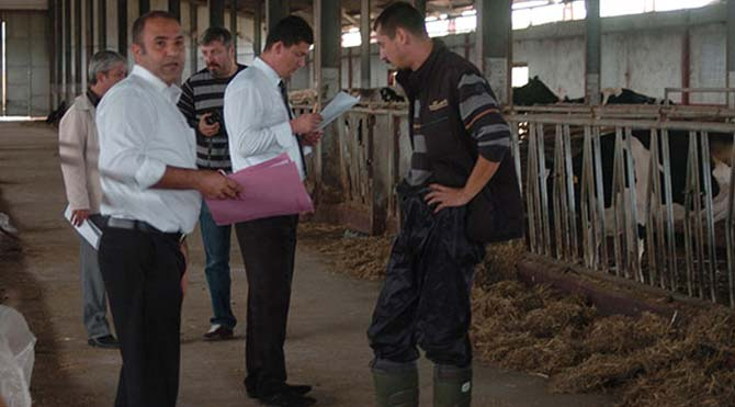 İcradan satışa çıkarılan inekler kayıp