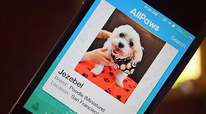 Evcil hayvanlar için Tinder