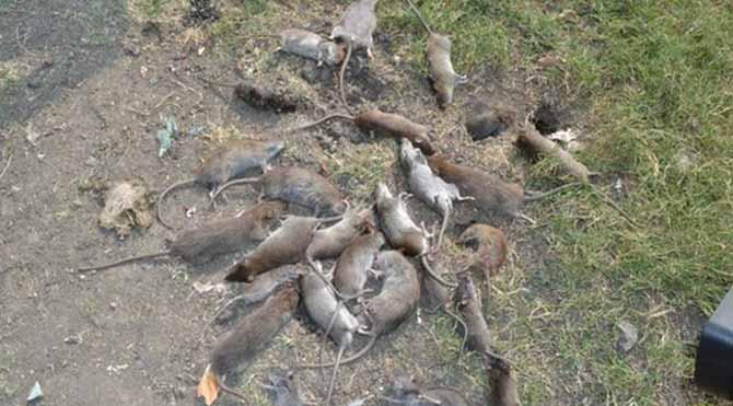 Hastaneyi 70 bin fare bastı