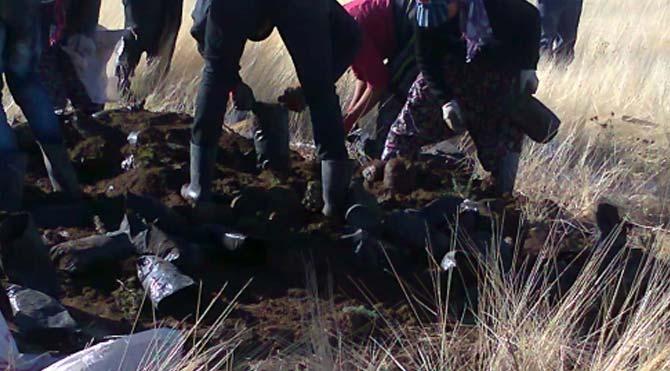'Binlerce fidan dikilmeden imha edildi' iddiası