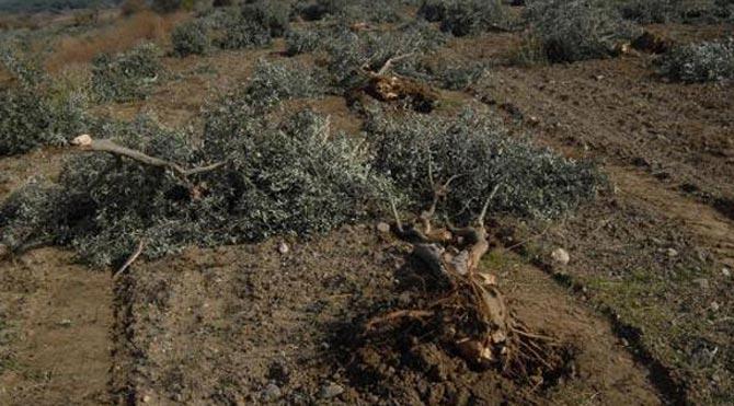 Ağaç kesimine suç duyurusu