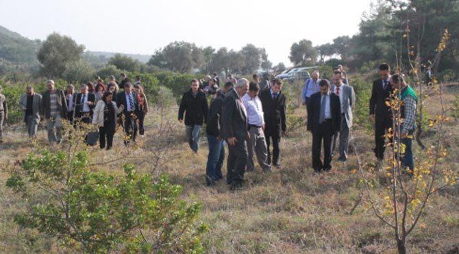 Sakız ağacı için 20 bin hektar