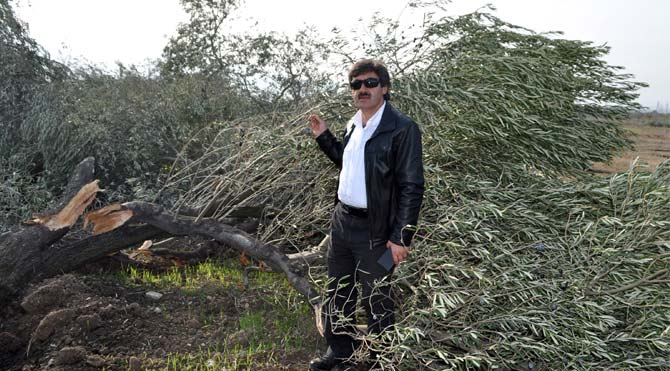 'Zeytin ağacı kıyımının sürmesinden endişeliyiz'