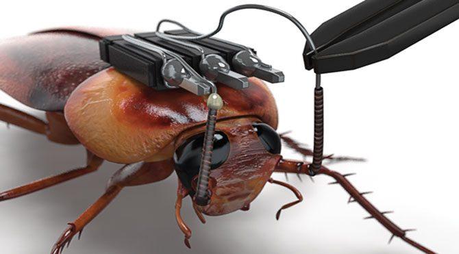 Türk bilim adamından müthiş buluş: Böcekbot