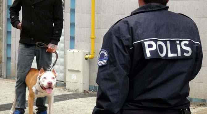 Çanakkale'de pitbull dehşeti