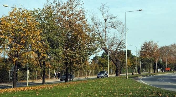 Yalova'da ağaç eylemi