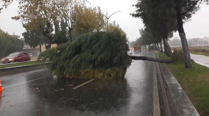 Yağmur ağaçları devirdi