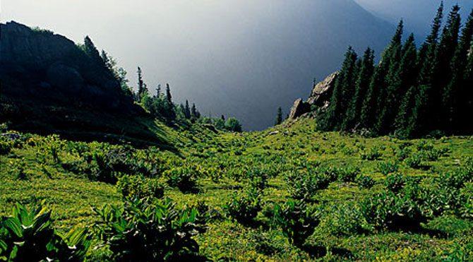 Talan sırası Kaz Dağları'nda