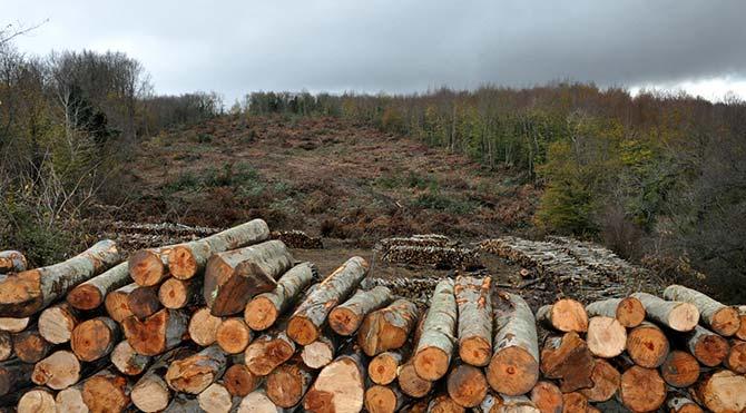 43 bin ağaç kesilecek!