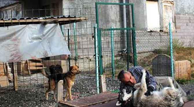 Köpekleri için yardım bekliyor