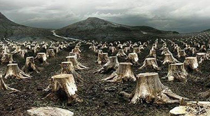 Çaldağı'nda 200 bin ağacı kesmişler, TÜBİTAK'tan da 2.8 milyon TL para almışlar