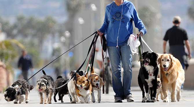 Köpeğini günde 3 kez gezdirmeyene ceza