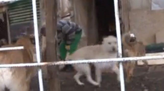 45 sokak köpeğine bakıyor