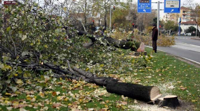 Yol için 180 ağaç kesildi