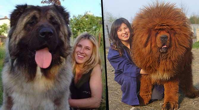 Dünyadaki en güzel köpek hangi cins aittir