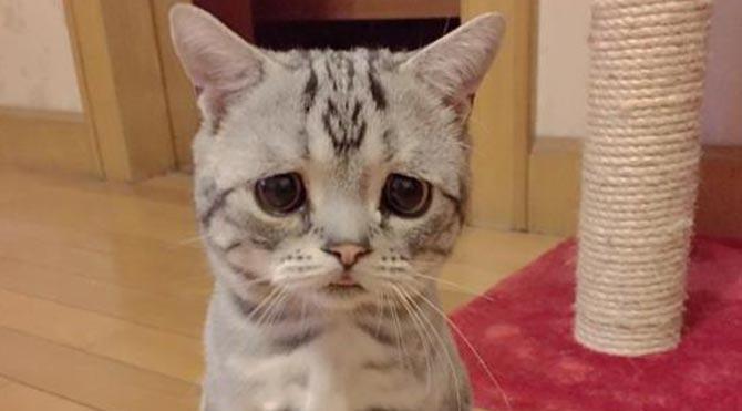 Dünyanın en üzgün kedisi Luhu