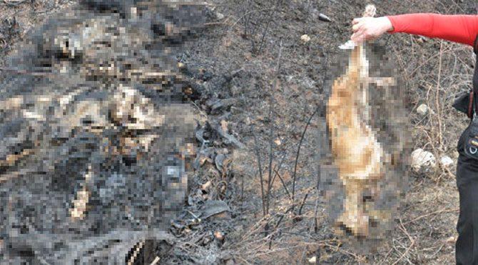 Kütahya'da toplu köpek katliamı