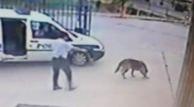 Komiser yardımcısı, karakolun bahçesinde köpeği vurdu