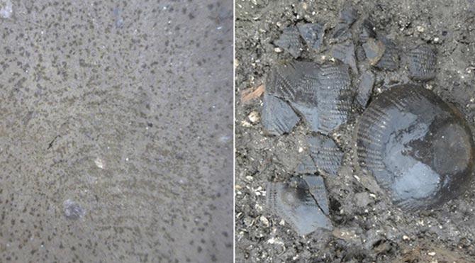 5 bin 500 yıllık parmak izi