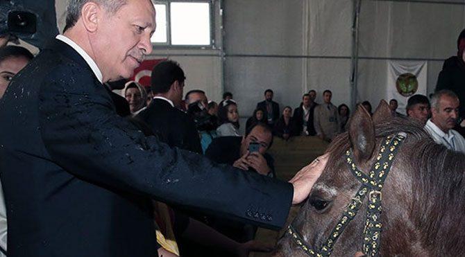 Erdoğan'ın atlarına karantina!