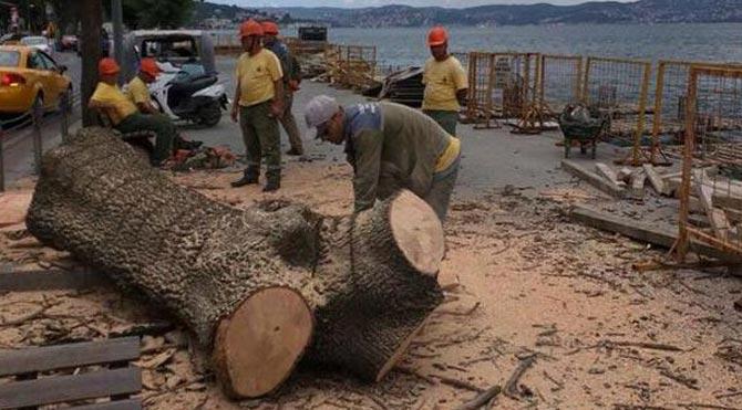 Emirgan'daki ağaçlar bu yüzden kesilmiş