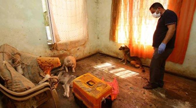 Hayvanlara işkencenin cezası belli oldu