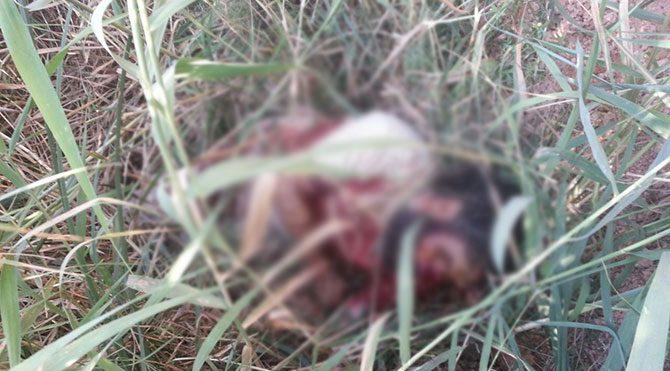 İşte öldürülen IŞİD'cinin fotoğrafı