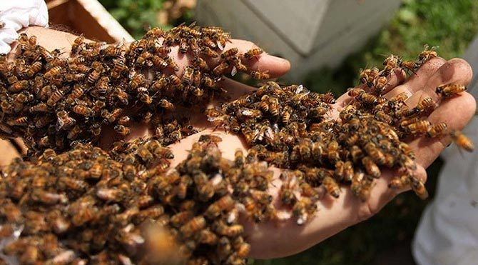 Şenlik dönüşü arıların saldırısına uğradılar