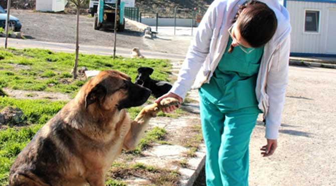 Çankaya'dan hayvanlara yardım