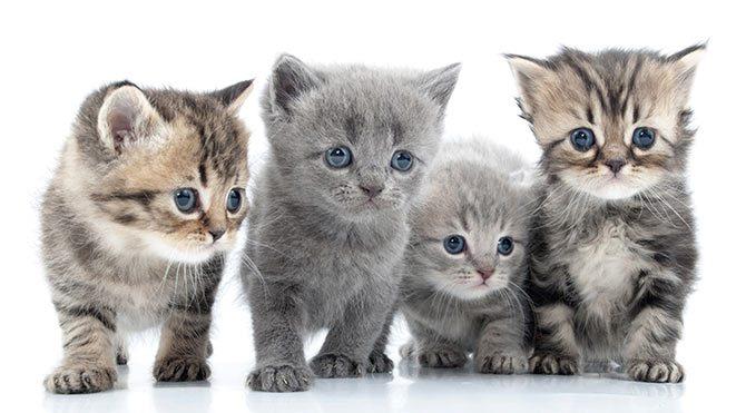 Kedi yavrularını çöpe atan kadına hapis cezası