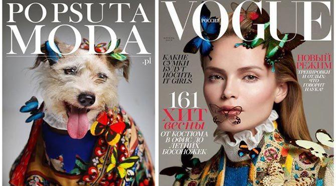 Terk edilen köpekler dergi kapaklarında