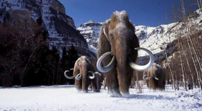 Amerika'da eksikiz bir mamut fosili bulundu!