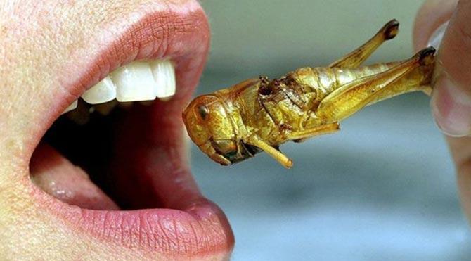 """""""Böcek yemek yararlı"""""""